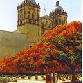 les fleurs au mexique