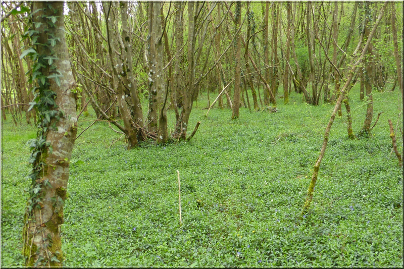 Geocaching foret d'Orleans (4)
