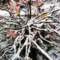 bouquet de branches de bruyères arborescente sous la neige
