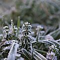 Givre * Frost #1