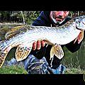 Attaque surface popper stick-bait de fin de saison