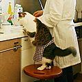 [GRIF' Informe] Comment stopper la <b>diarrhée</b> de mon chat grâce au régime poulet-courgettes !