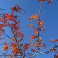 automne066