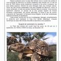 Le pays des tortues
