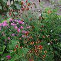 2009 07 21 Mon mélange de fleurs qui attire les papillons