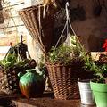 Profitez du soleil petites plantes