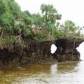 Derrière ce rocher il y a une petite piscine naturelle avec des poissons