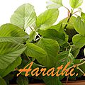 Tropical Green <b>Amaranth</b>