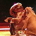 un éléphant ça trompe ... deux ...