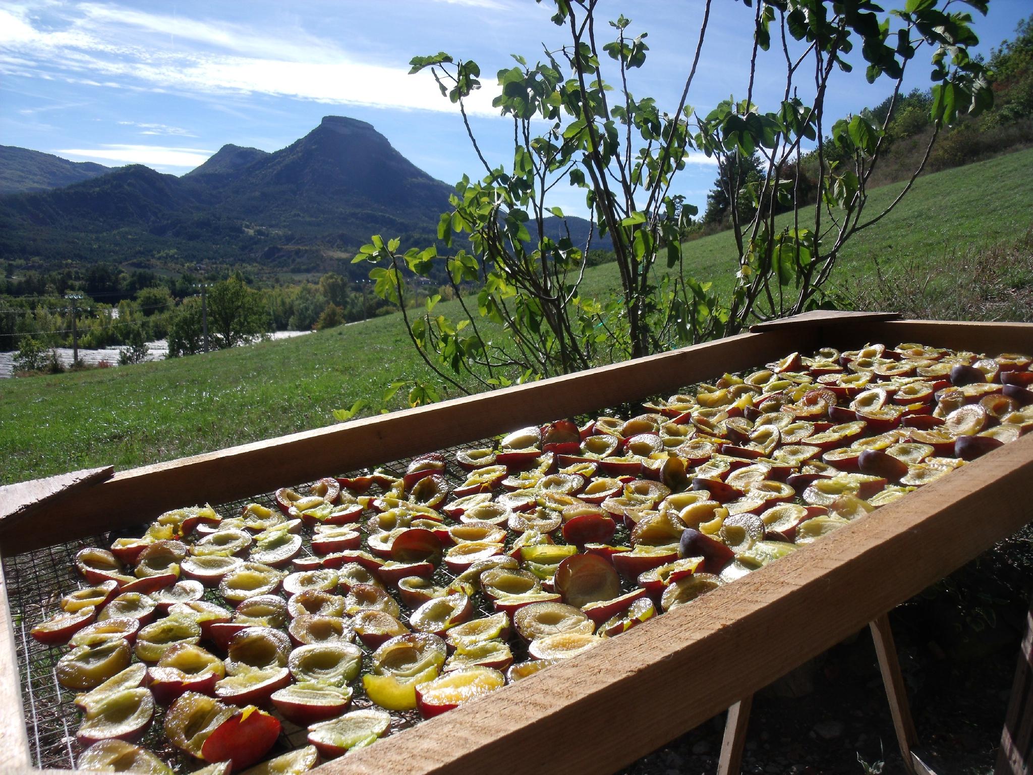 """FAIRE DES """"ÉCARTES""""...des prunes séchées! et ...la tarte !"""