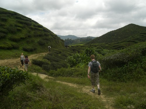Cameron Highlands, trek, plantation de the