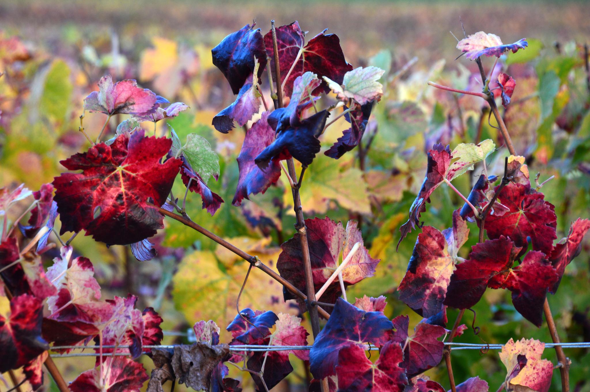 Berru aux couleurs de l'automne