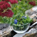 Salade pourpier-pimprenelle