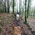 Balade à cheval dans la forêt P1080278