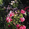 Mon jardin : Explosion de petits et de grands bonheurs