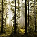 morning_forest