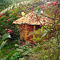 cabane aux fusains