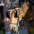 bruges_paard_avond