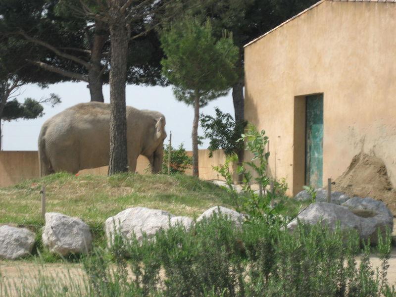 zoo 028