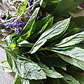 SAUCE FROIDE AUX HERBES