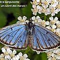 RN 59 : Riposte sans nouveaux arguments d'<b>Alsace</b>-Nature