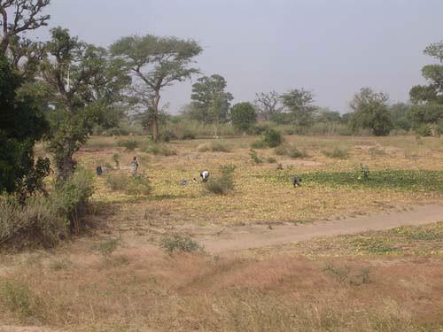 Récoltes dans les champs