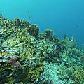 Vidéo de plongée en Guadeloupe