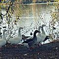 Visite aux étangs...