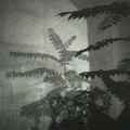 08-Paysage-d'ombres-