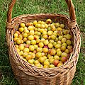 Tarte rustique mirabelles & pistaches
