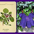 Des pétales de violette