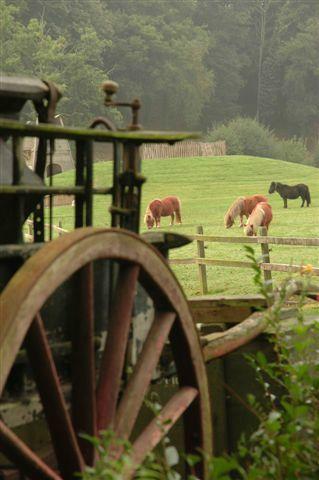 roue poneys