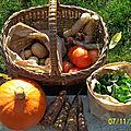 AMAP l'Aube des Légumes