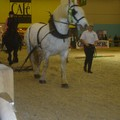 Salon du Cheval 2007 - UTL