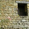 mur en coing