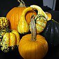 Citrouilles et compagnie - pumpkins & cie