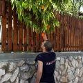 Critique de oranges, par les 6°et 4°