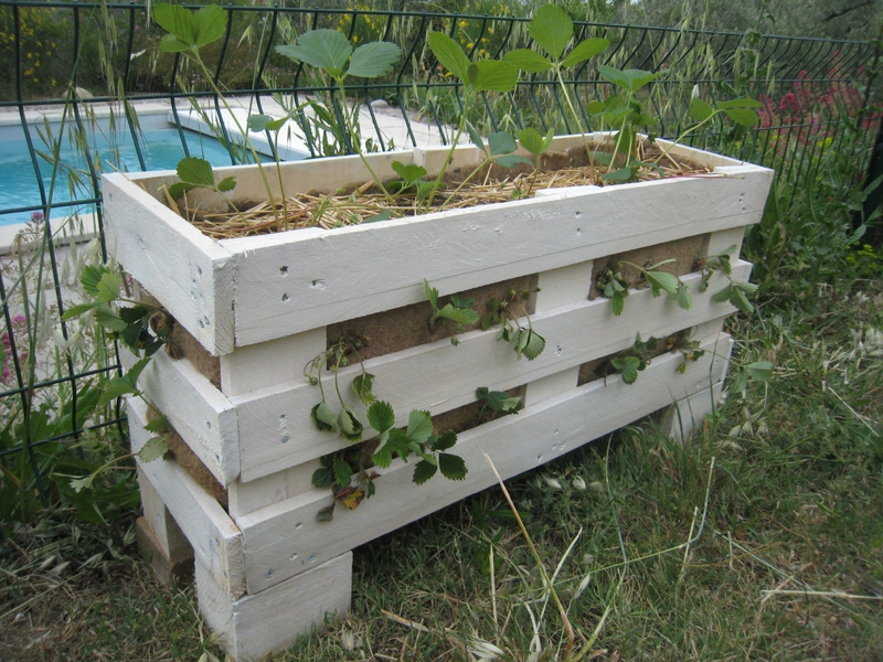 des fraises en hauteur dans un tube pvc cr ations et bricolages d 39 oli. Black Bedroom Furniture Sets. Home Design Ideas