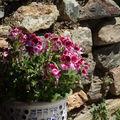 Des fleurs pour dimanche