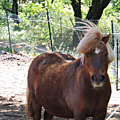 ~ chevaux au vent. ~