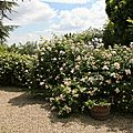 Roses muret_13 12 06_4526