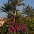 jardin de l'hotel sangho privilège