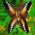 Butterfly (80)
