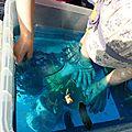 Bac sensoriel océan et pêche à pied