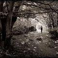 Une promenade en forêt