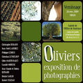 Exposition - oliviers