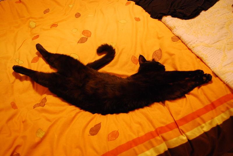 acrobate en dormant