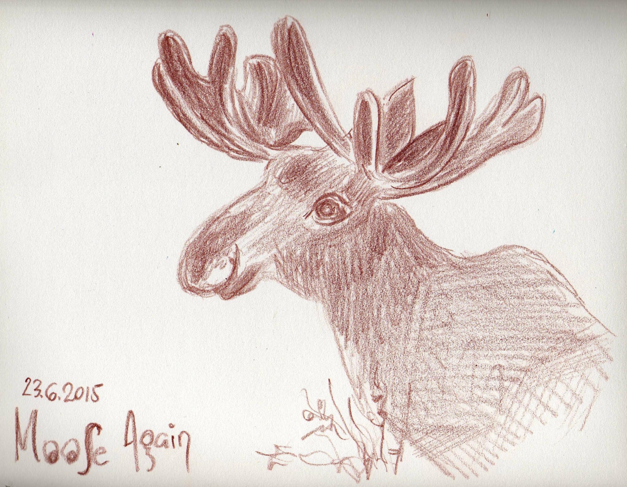 042_moose