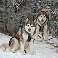 Saison hiver avec Djinn et Laïka (2018)