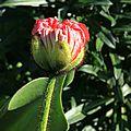 Eclosion des fleurs de printemps - jardin des plantes orléans (loiret)